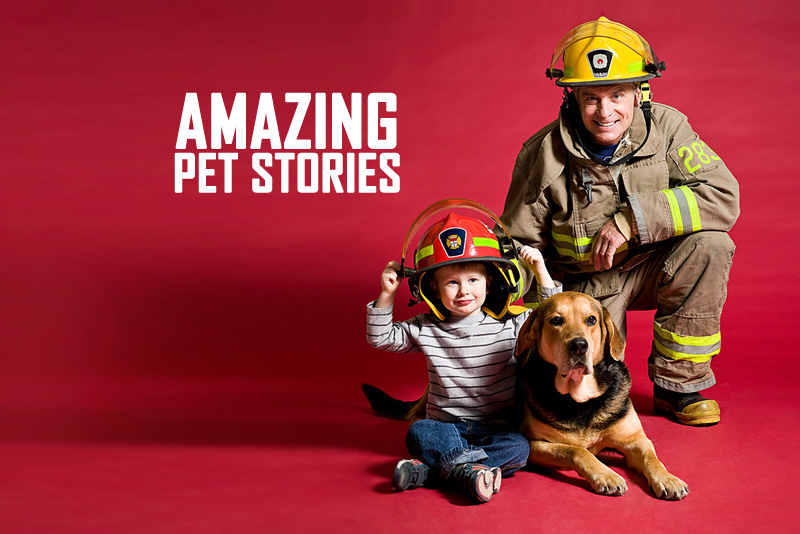 Amazing Pet Stories